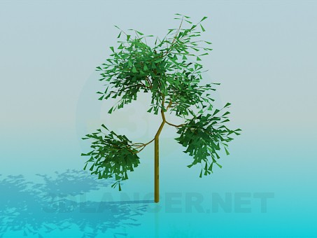 3d modeling Small tree model free download