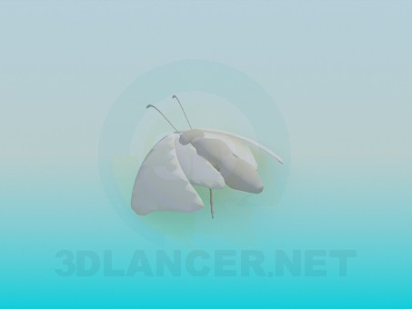 3d model Moth - preview