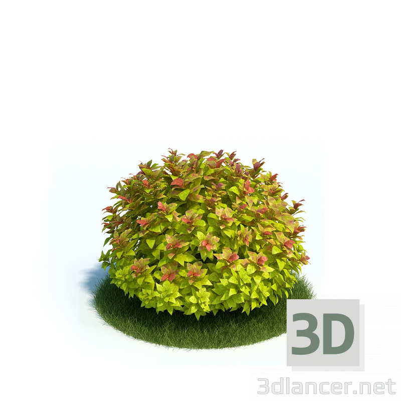 3d model Japanese spirea - preview