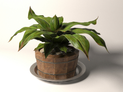 Plant in a wooden pot