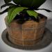 3d Plant in a wooden pot model buy - render
