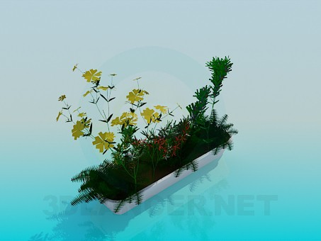 3d model Rectangular pot with flowers - preview