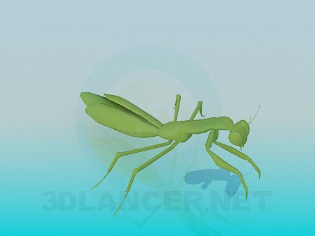 3d model Praying Mantis - preview