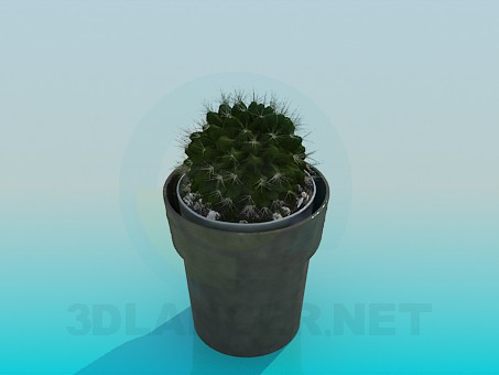 3d model Cactus in a pot - preview