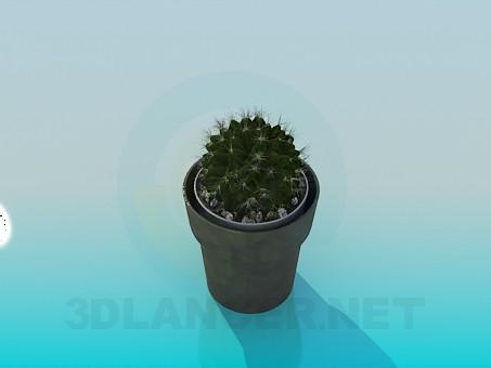 modelo 3D Cactus en una olla - escuchar
