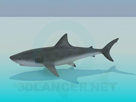 3 डी मॉडल शार्क - पूर्वावलोकन