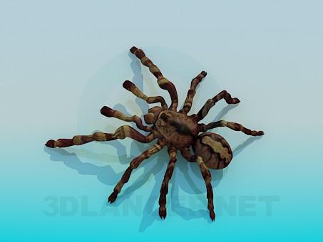 3d modeling Spider model free download