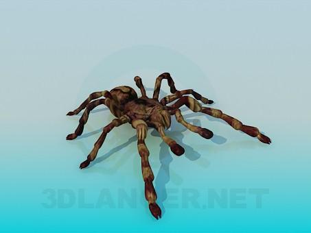 3d model Spider - preview