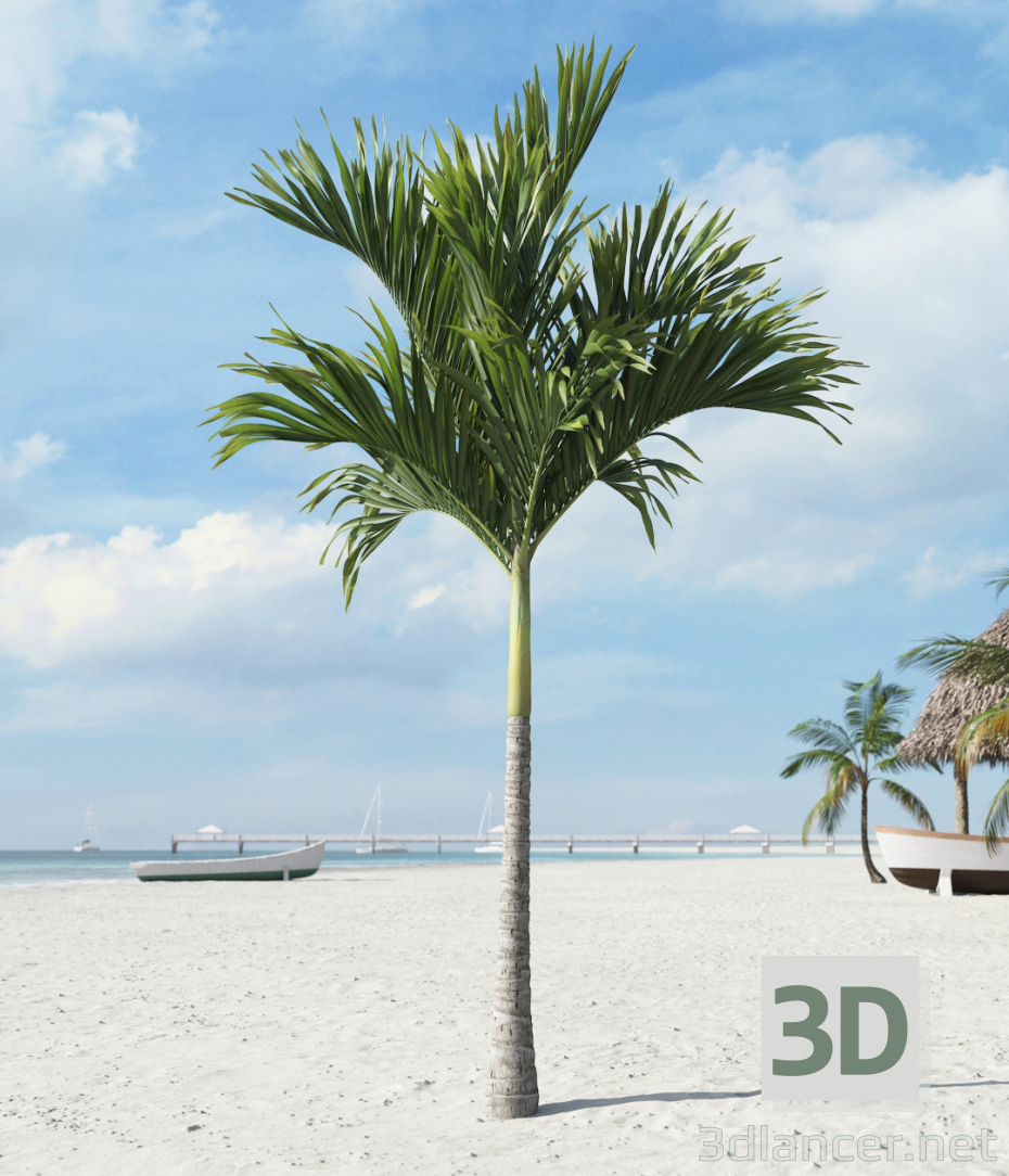 3d model Palm tree - preview