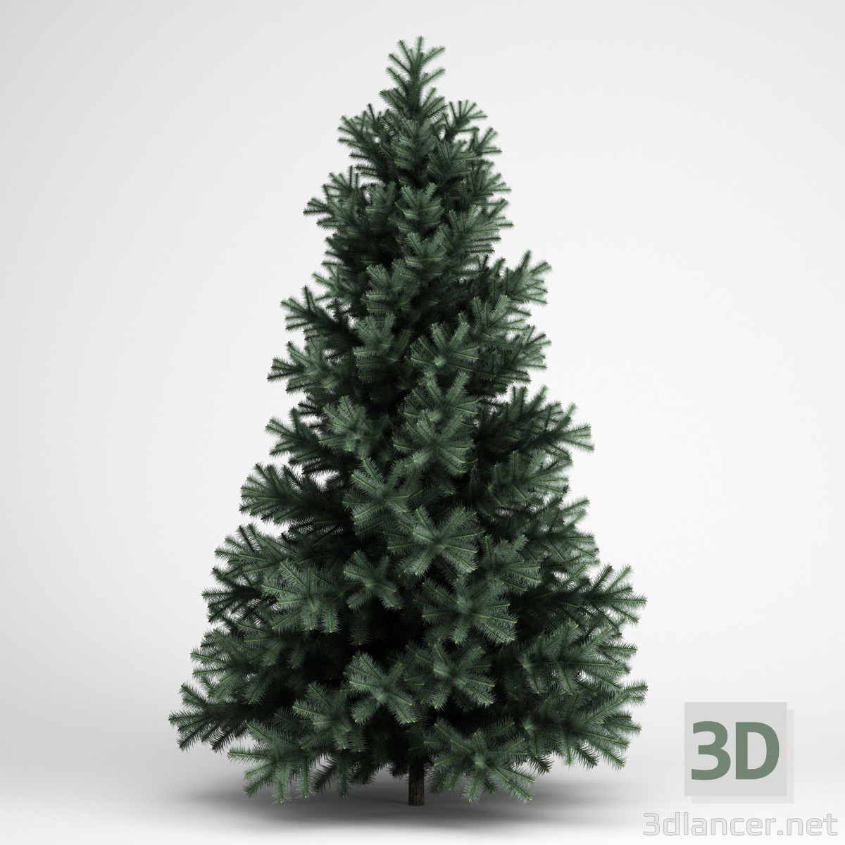 3d model Spruce - preview