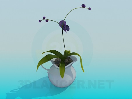 3d modeling Pitcher with room flower model free download