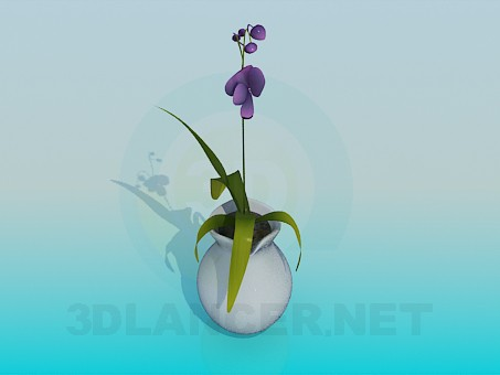 3d model Pitcher with room flower - preview