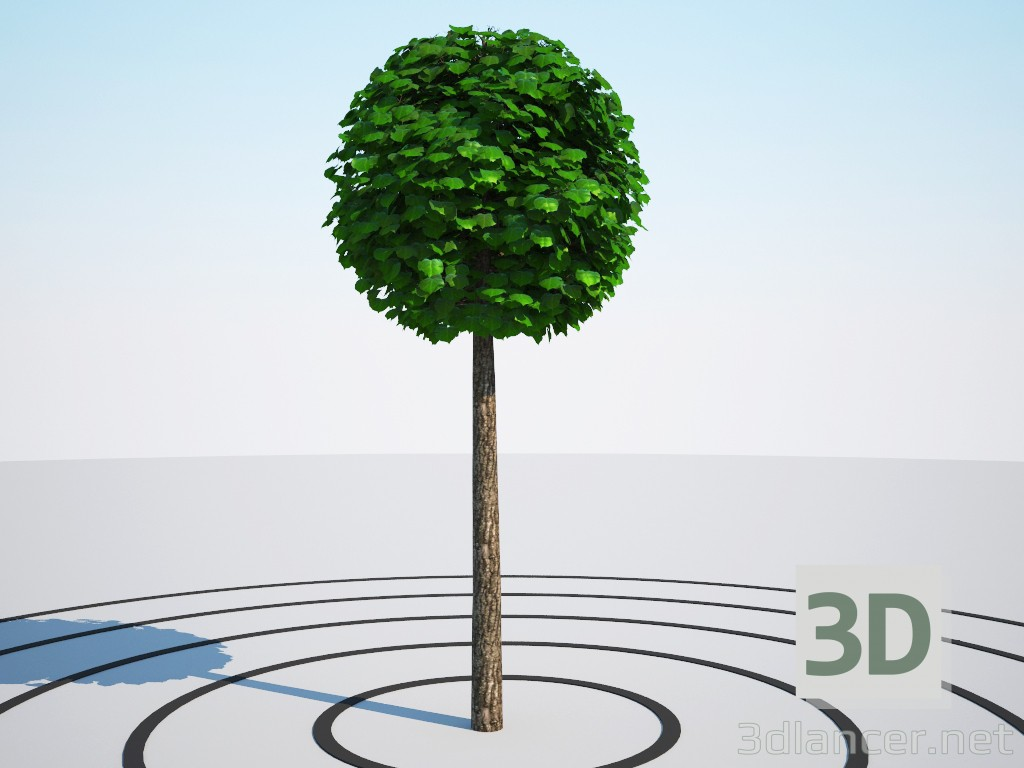 3d Tilia platyphyllos, ball on the trunk model buy - render
