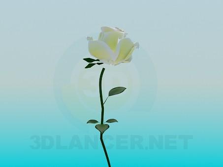 3d model Rosa blanca - vista previa