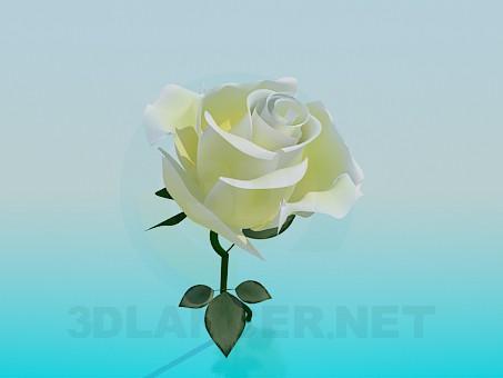 3d model White Rose - preview