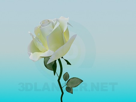 3d модель Біла троянда – превью