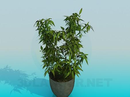 3d model Lush pot - preview