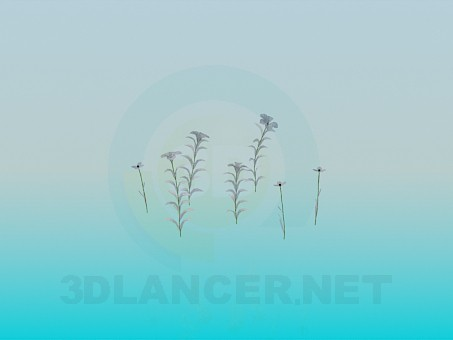 3d modeling Spring flowers model free download