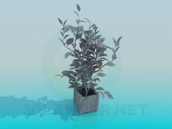 Растения Plants