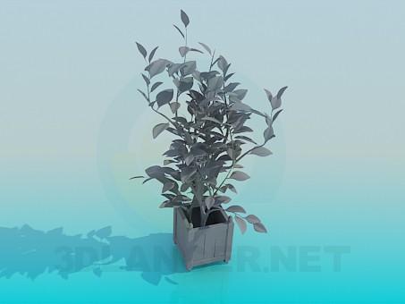 descarga gratuita de 3D modelado modelo Plantas растения
