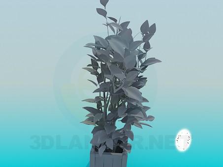 3d модель Растение комантное – превью