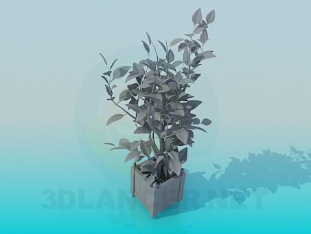 3d model Растения Plants - preview