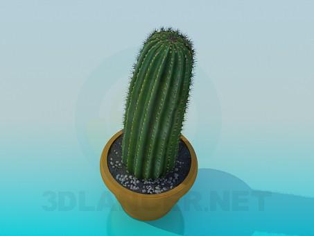 modelo 3D Cactus - escuchar