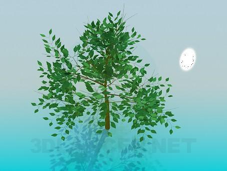 modelo 3D Árbol - escuchar