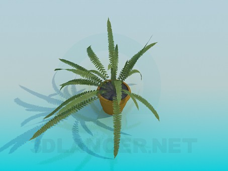 3d modeling Fern model free download