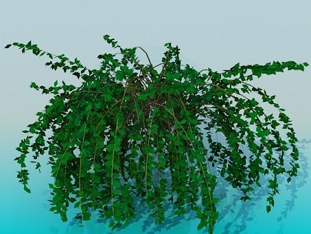3d model House plant - preview