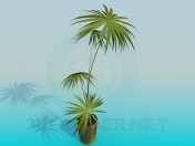 Palm in a pot