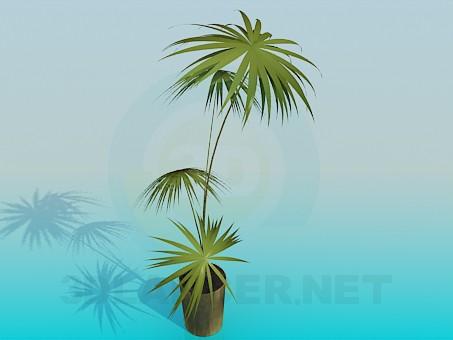 3d моделирование Пальма в горшке модель скачать бесплатно