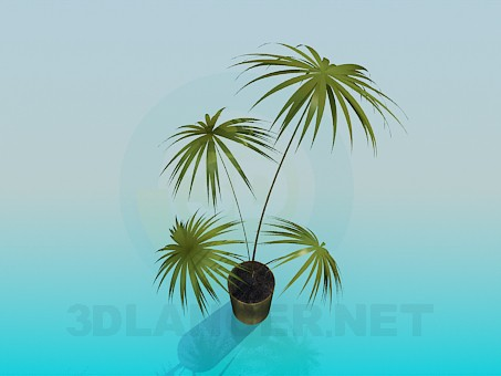 3d model Palm in a pot - preview