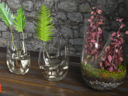पौधे का टेरारियम। सेट # 4