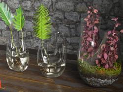 Terrarium végétal. ENSEMBLE # 4