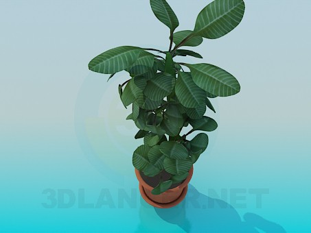 3d modeling Plant model free download