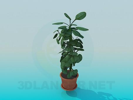 modelo 3D Planta - escuchar