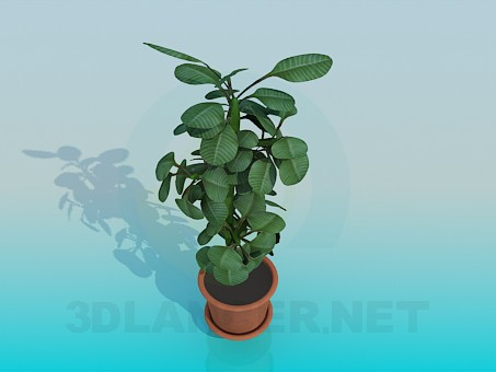 3d модель Растение – превью