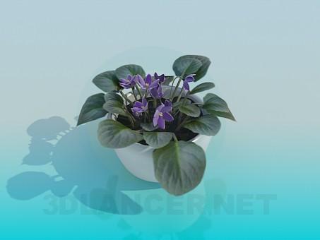 modelo 3D Violetas - escuchar