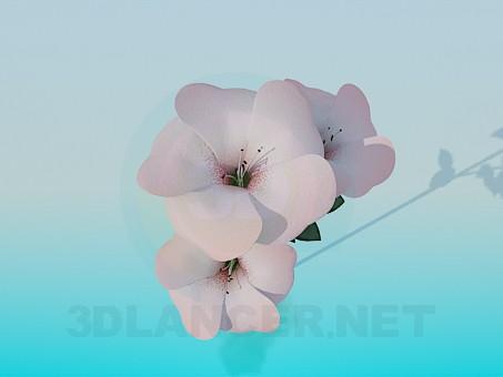 3d model 5 petal flowers - preview