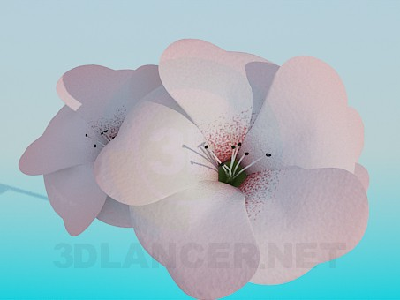 3d model Flowers - preview