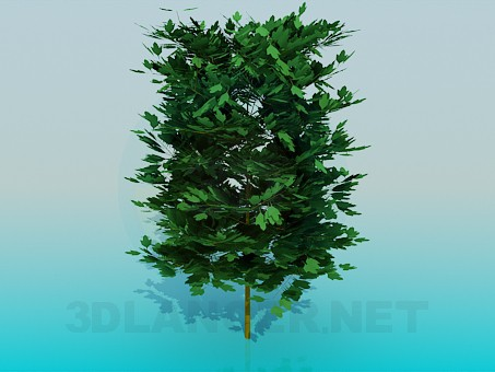 3d modeling Thick tree model free download