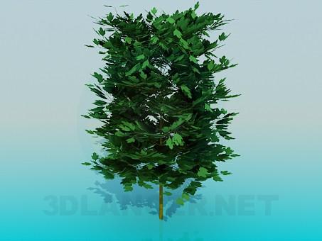 3d модель Пишне дерево – превью