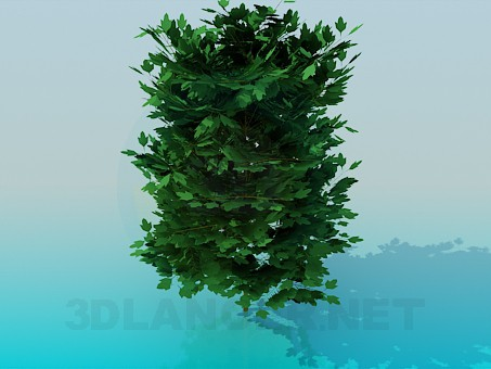 3d model Thick tree - preview