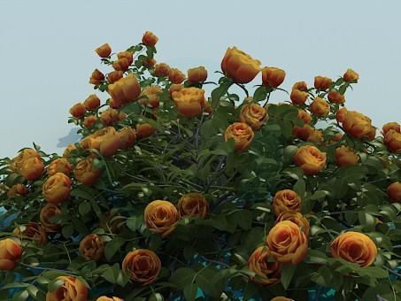 3d модель Розы – превью