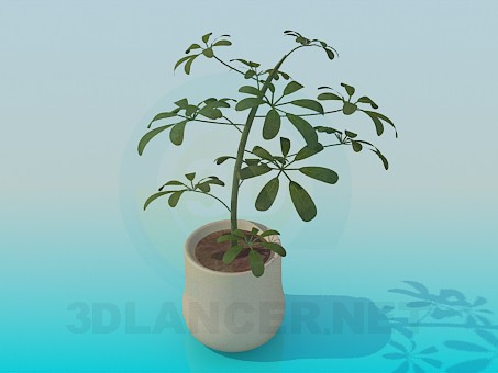3d modeling Pot model free download