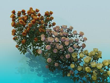 3d model Rose bushes - preview