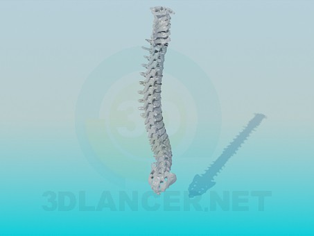 3d model Human spine - preview