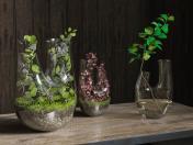 Plant terrarium. SET # 2