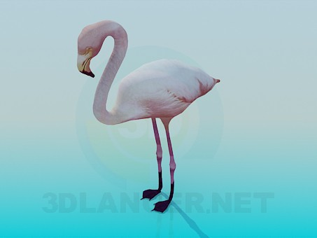 3d model Flamingo - preview